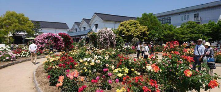 綾部バラ園開園10周年 春のバラまつり