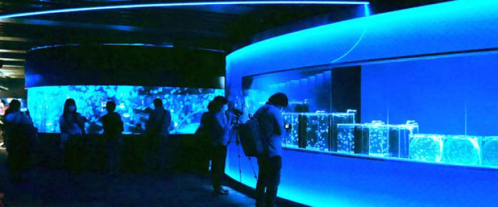 京都水族館、新エリア「クラゲワンダー」