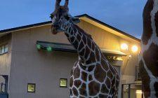 妖怪ナイト at the zoo 2020