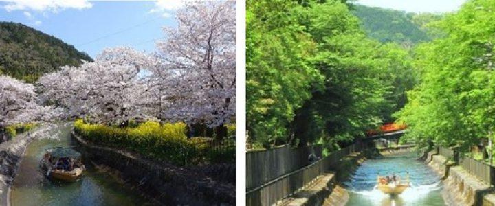 びわ湖疏水船、春シーズン