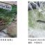 「鴨川の天然鮎」友釣り大会