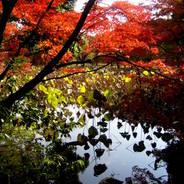 紅葉 京都植物園