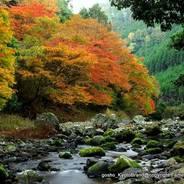 紅葉 錦雲峡