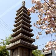 普賢象桜 花見 石碑  千本ゑんま堂