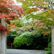 紅葉狩  嵐山 京都吉兆