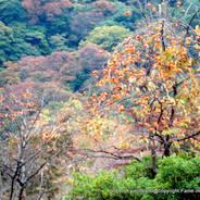 紅葉狩  嵐山 亀山公園