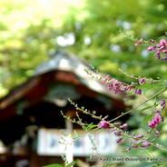 萩 花暦 梨木神社