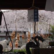 千本釈迦念仏 花見 六角堂頂法寺 聖徳太子 親鸞 池坊