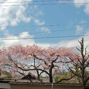 花見 観桜 有栖川宮邸