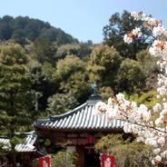花見 桜 紅葉 二尊院 嵯峨天皇 円仁(慈覚大師)