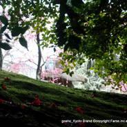 観梅 花見 枝垂れ梅と椿まつり 城南宮 楽水苑 春の山 中根金作