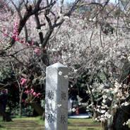 観梅 花見  京都御苑