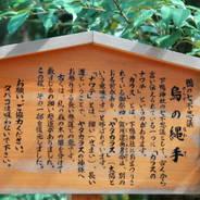 観梅 花見 駒札  下鴨神社 糺の森