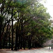 世界遺産  下鴨神社 糺の森