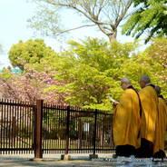 花見 八重桜 東寺