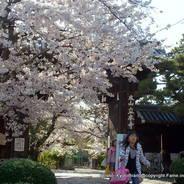 花見 立本寺