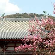 梅 宇治平等院