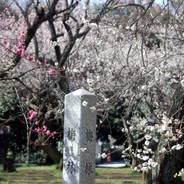 桃の節句 京都御苑 梅林