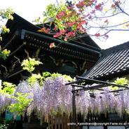 花見 六孫王神社