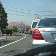 桜 花見 渋滞