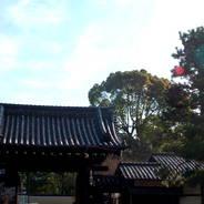 正月  建仁寺