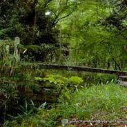 蛍狩り 世界遺産 下鴨神社 瀬見の小川 糾の森