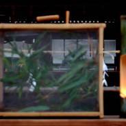蛍狩り 蛍火の茶会 世界遺産 下鴨神社