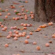 銀杏 紅葉 黄葉 御射山公園