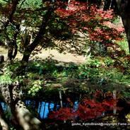 紅葉 秋の特別公開 くろ谷金戒光明寺 紫雲の庭 法然